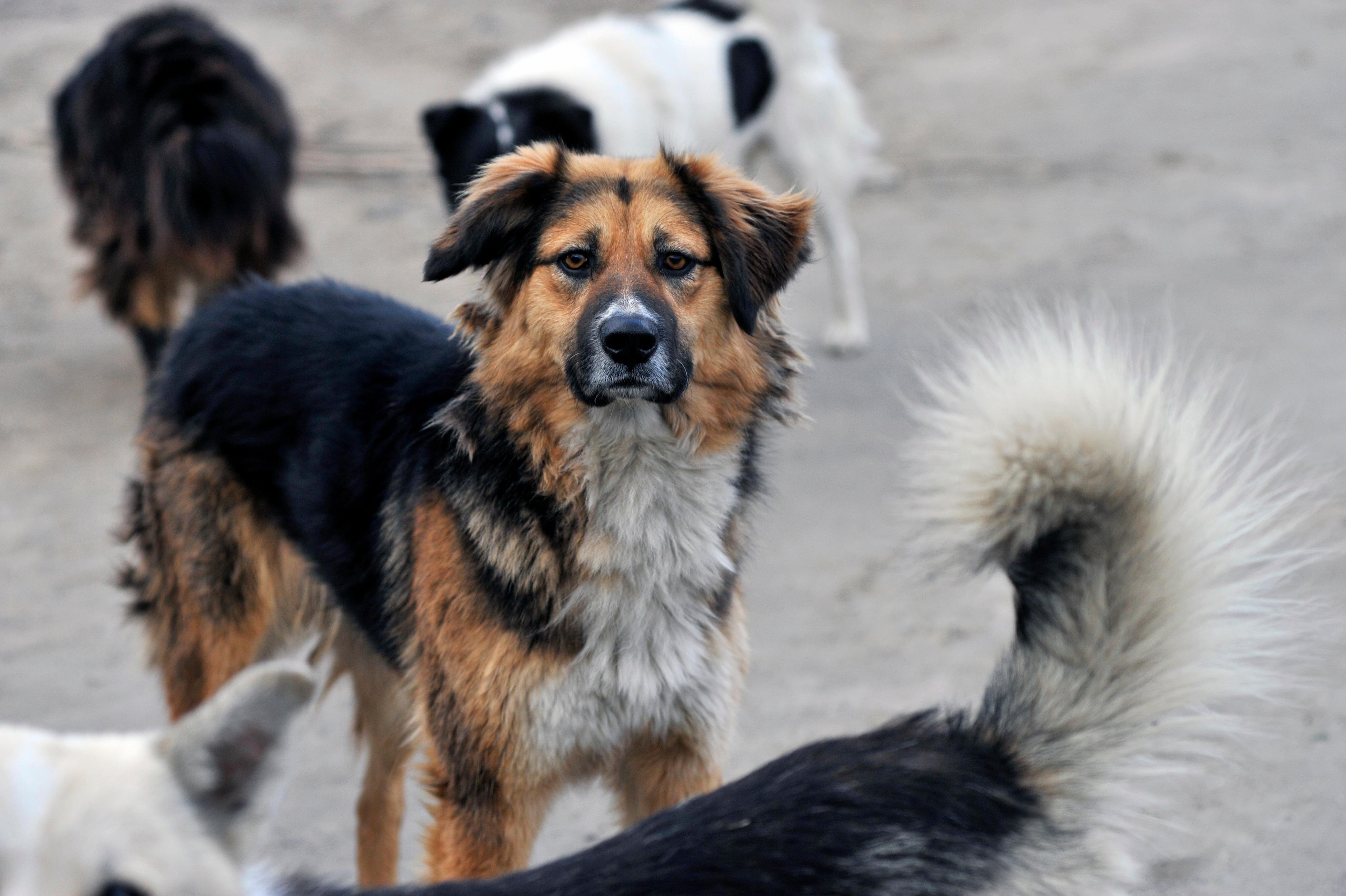 В Ессентуках поставили на учет бездомных собак